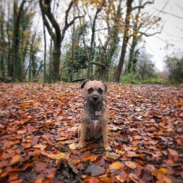 Dog Walking Brighton