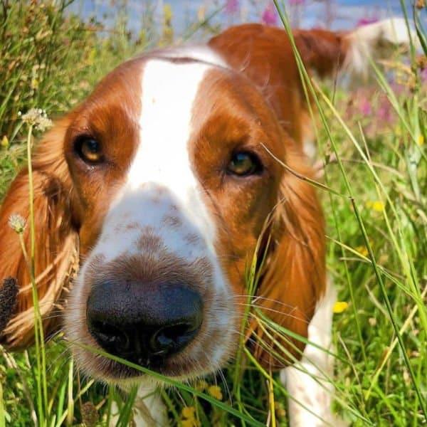 Dog Walker Brighton